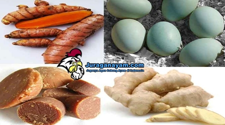 Jamu Ayam Bangkok Terbaik