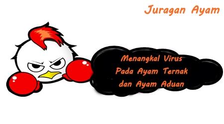 Virus Merupakan Penyakit Berbahaya Bagi Ayam