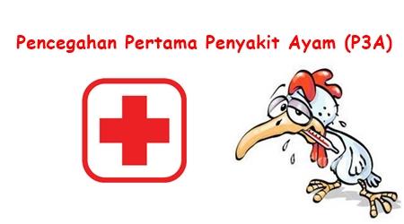 pencegahan pertama penyakit ayam