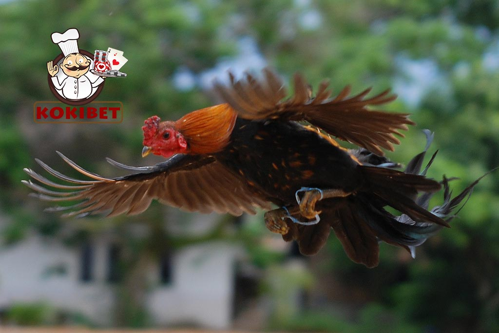 penyebab ayam tidak bisa terbang