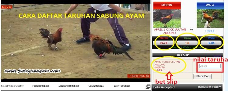 Bermain Sabung Ayam Online