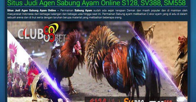 keuntungan bermain sabung ayam online, agen sabung ayam online, sabung ayam online, club88bet