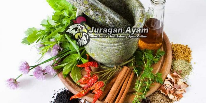 jenis tanaman herbal untuk ayam aduan