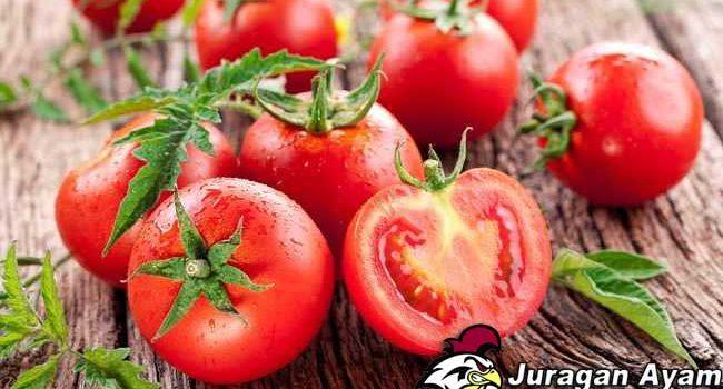 Manfaat Tomat Untuk Kesehatan Ayam Bangkok