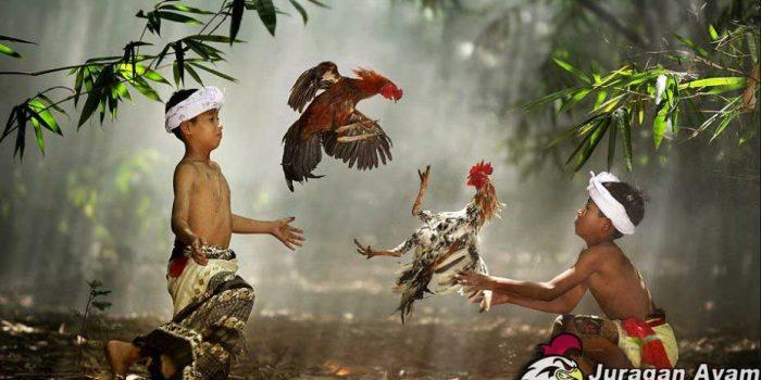 Asal Mula Nama Ayam Bangkok