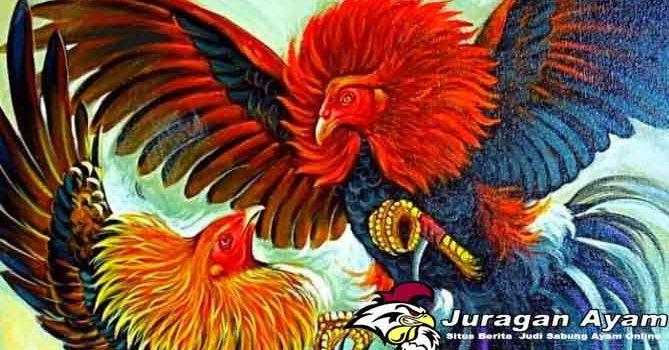 Manfaat Buah Pada ayam Bangkok Aduan