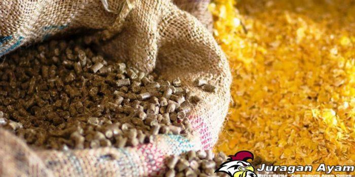 Sumber Protein Hewani Untuk Pakan Ayam Bangkok Super
