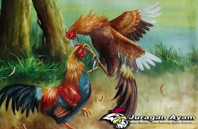 Syarat Mutlak Yang Wajib Dimiliki Ayam Aduan Petarung
