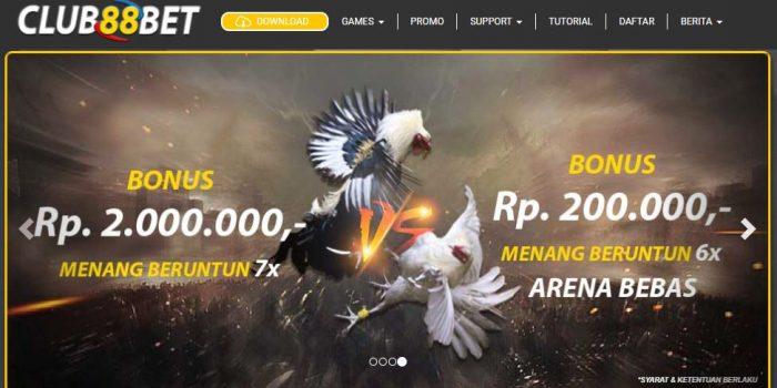 Trik Dan Persiapan Menang Judi Sabung Ayam Online