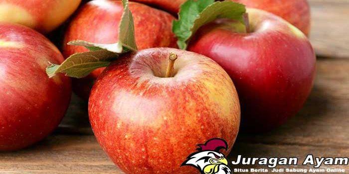 Beberapa Manfaat Apel Untuk Ayam Aduan
